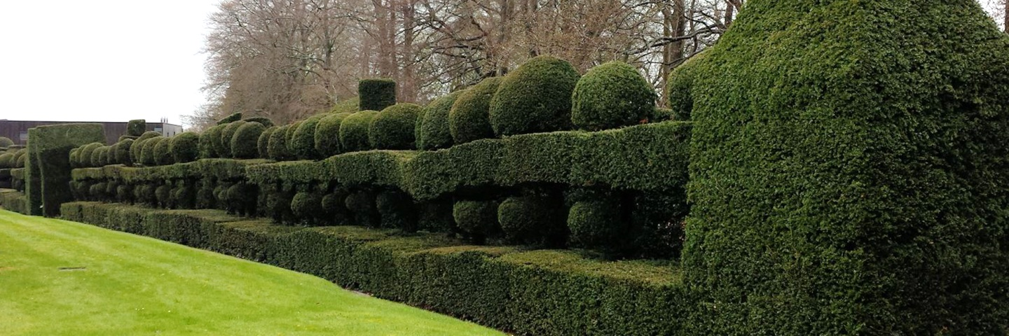 Hedge sculpture