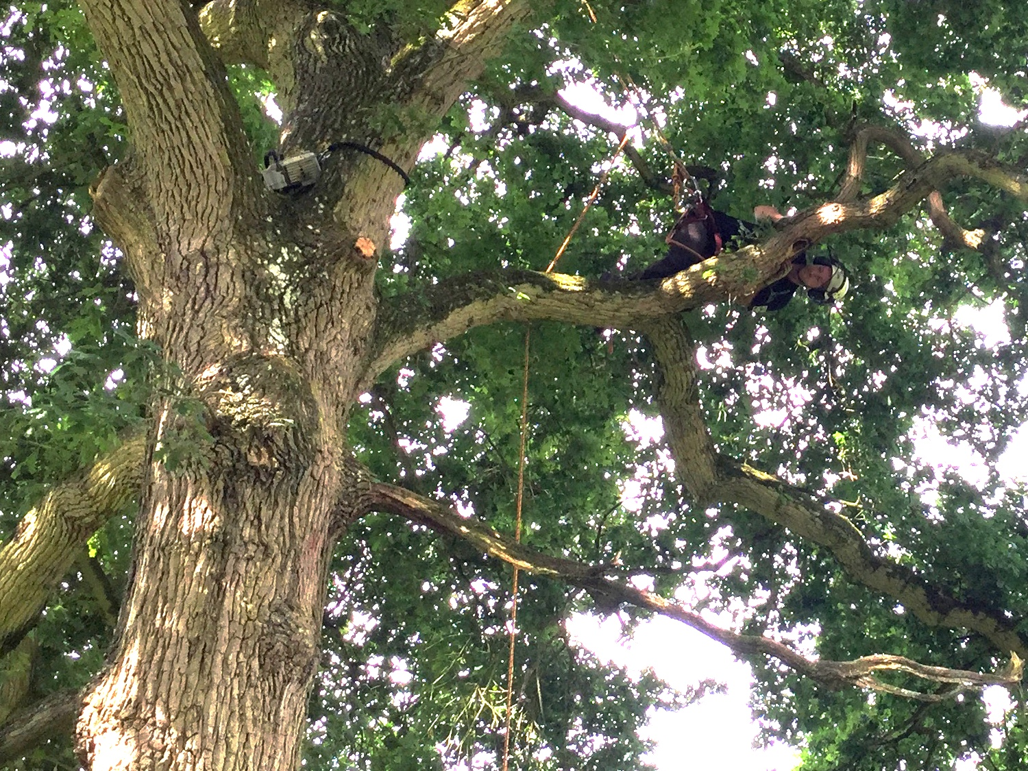 Aeriel tree inspection
