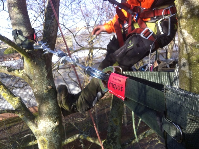 Tree preservation cable bracing
