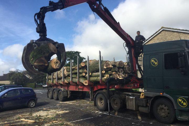 Timber for Bio-mass
